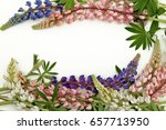 lupines flowers on white wooden  | Shutterstock . vector #657713950