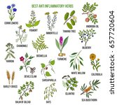 best anti inflammatory herbs.... | Shutterstock .eps vector #657720604