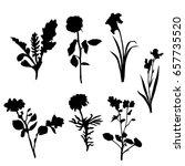 vector silhouette flowers ... | Shutterstock .eps vector #657735520