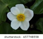 macro photo of a white flowered ... | Shutterstock . vector #657748558