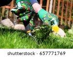 a man pulling  dandelion  ...   Shutterstock . vector #657771769