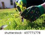 a man pulling  dandelion  ... | Shutterstock . vector #657771778