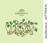 background with soybean sprouts ... | Shutterstock .eps vector #657795976