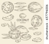 collection of coconut  coconut... | Shutterstock .eps vector #657796006