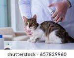 cat visiting vet for regular... | Shutterstock . vector #657829960