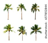 coconut tree on white... | Shutterstock . vector #657852844