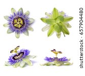 Passiflora Passionflower Isolated White Background - Fine Art prints