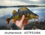 good spining fishing on... | Shutterstock . vector #657931486
