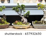Bonsai In The Garden Of A House