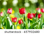 spring landscape with flowers.  ... | Shutterstock . vector #657932680