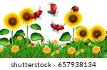 ladybugs flying in sunflower... | Shutterstock .eps vector #657938134