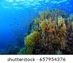 exotic colorful rich tropical... | Shutterstock . vector #657954376