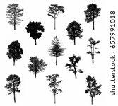 black tree silhouettes on white ... | Shutterstock . vector #657991018