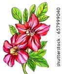 red adenium house plant blossom.... | Shutterstock . vector #657999040