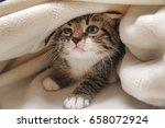 kitten peeping out from under...   Shutterstock . vector #658072924