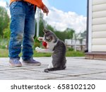 Stock photo boy is playing with small cat cat is chasing toy mouse 658102120