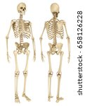 human skeleton isolated  ... | Shutterstock . vector #658126228