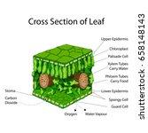 education chart of biology for... | Shutterstock .eps vector #658148143