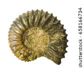 Small photo of A well preserved ammonite specimen. Ammonite prehistoric fossil on white background. Ural.