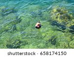 netta rufina floats on the...   Shutterstock . vector #658174150