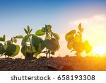 low angle view of soybean in... | Shutterstock . vector #658193308