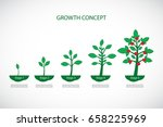 growth concept. plant growth... | Shutterstock .eps vector #658225969
