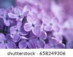 Gentle Flower Background From...