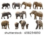 collection of several elephants ... | Shutterstock . vector #658254850