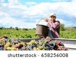 handsome young man winemaker in ...   Shutterstock . vector #658256008