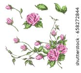 decorative hand drawn roses ... | Shutterstock .eps vector #658272844