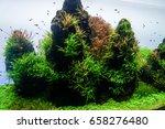 Planted Aquarium  Aquatic Fern...