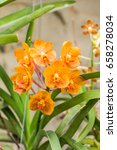 Small photo of orange vanda orchid flower
