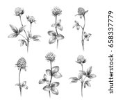 pencil drawings of clover... | Shutterstock . vector #658337779