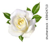 Stock photo white rose isolated on white background 658424713