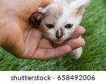 cute baby cat   Shutterstock . vector #658492006