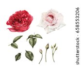 flowers and leaves   can be... | Shutterstock . vector #658553206
