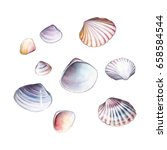 watercolor set of seashells on... | Shutterstock . vector #658584544