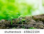 green plants | Shutterstock . vector #658622104