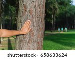 male hand places on the trunk... | Shutterstock . vector #658633624