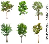 collections green tree isolated.... | Shutterstock . vector #658646548