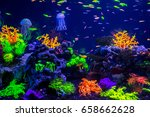 tropical fish with corals and... | Shutterstock . vector #658662628