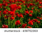 poppy flowers field. beautiful... | Shutterstock . vector #658702303