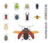 set of insects flat style... | Shutterstock .eps vector #658823236