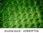 nice green leaf background from ... | Shutterstock . vector #658839706