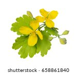 Yellow Flowers And Green Leaves ...
