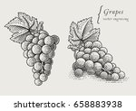 grapes. hand drawn engraving... | Shutterstock .eps vector #658883938