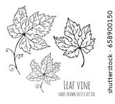 leaf vine. hand drawn vector... | Shutterstock .eps vector #658900150