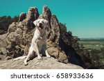 young cute labrador retriever... | Shutterstock . vector #658933636