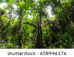 jungle | Shutterstock . vector #658946176