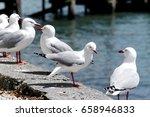 seagulls | Shutterstock . vector #658946833